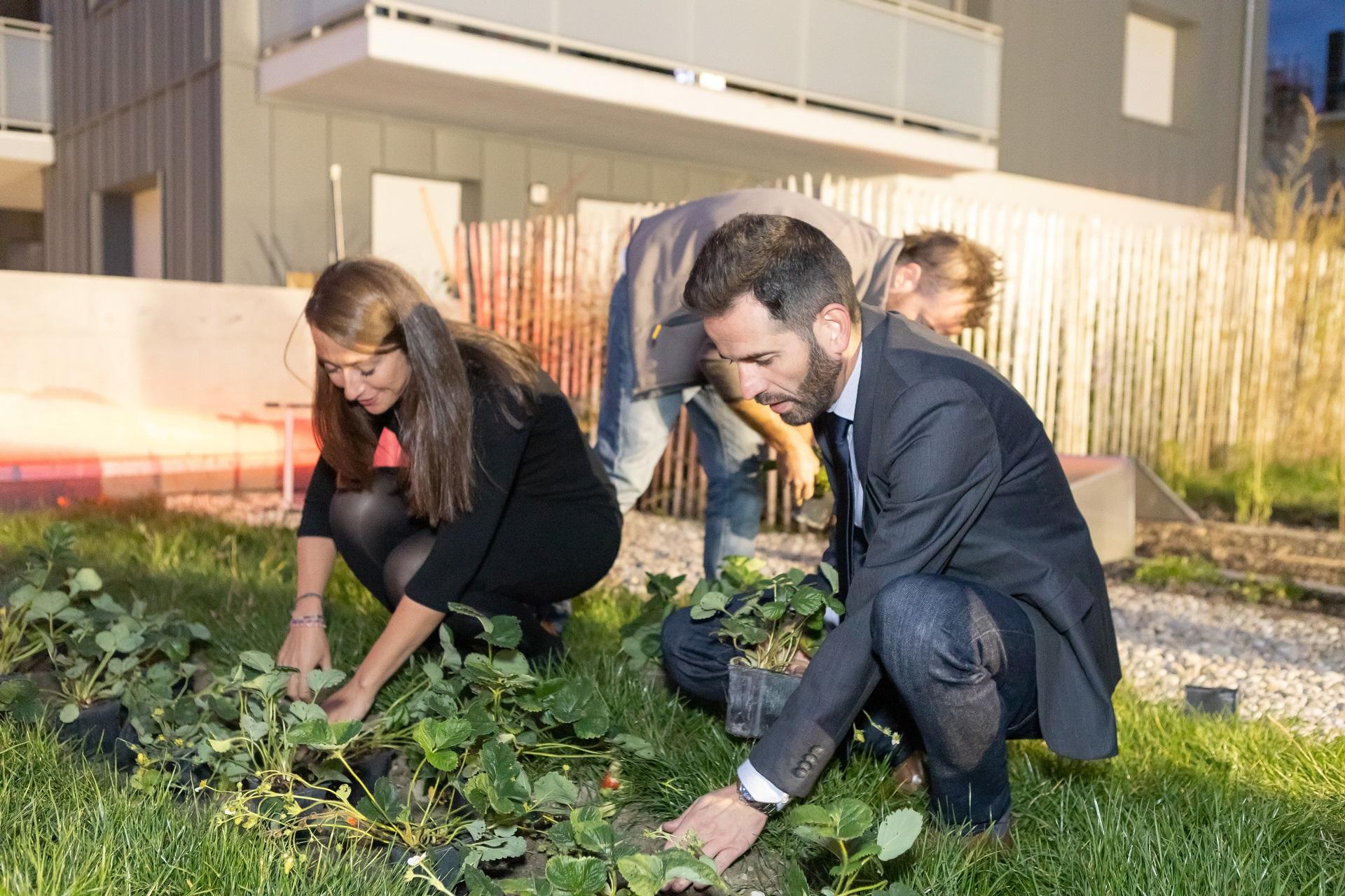 Plantation des fraisiers sur le toit pour l'inauguration des résidences Bouygues Immobilier
